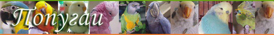 Волнистые попугайчики — уход за домашним питомцем.